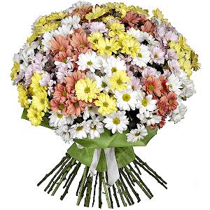 Хризантема кустовая (35 шт.)